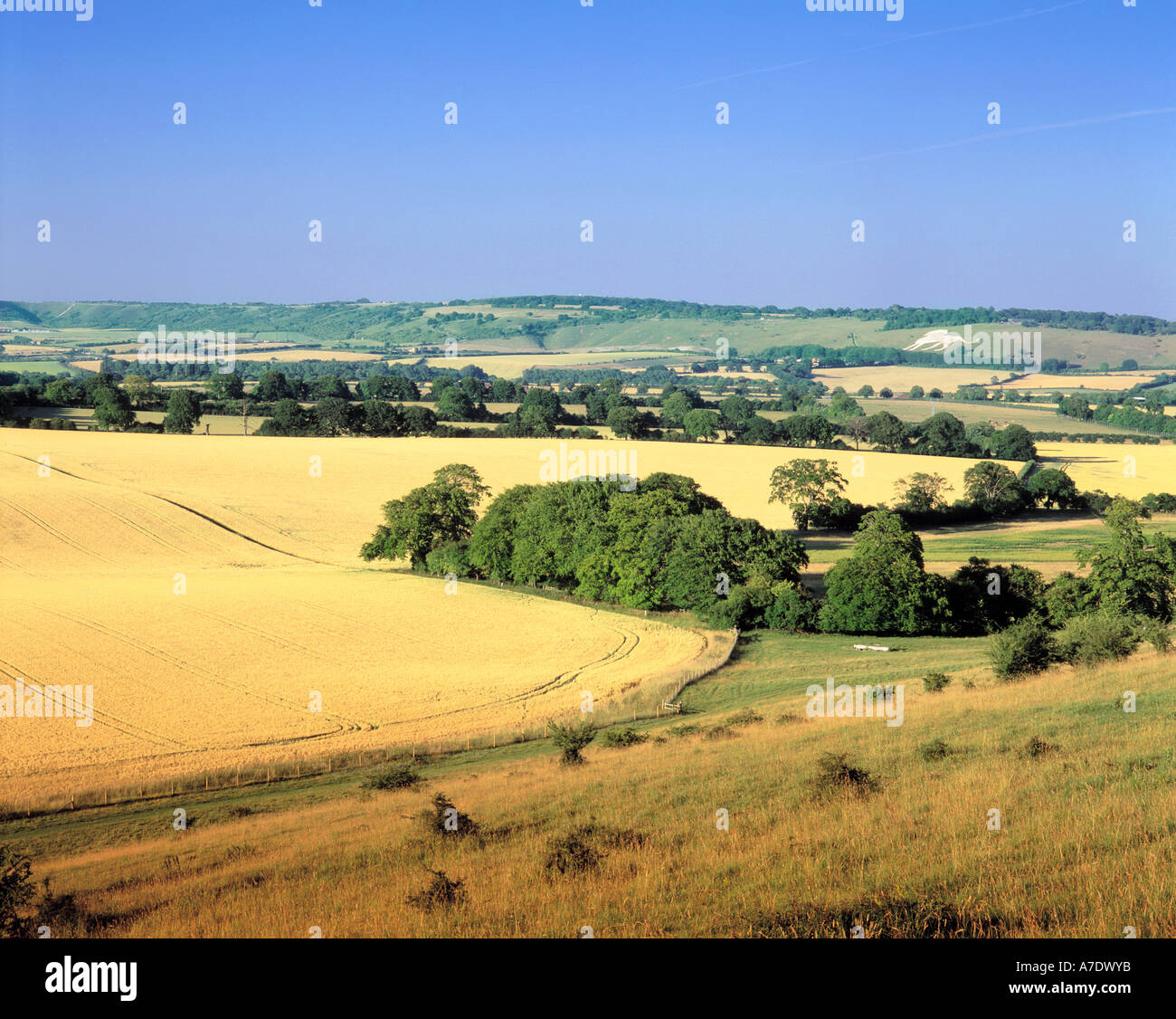 GB BUCKINGHAMSHIRE CHILTERNS DUNSTABLE DOWNS - Stock Image