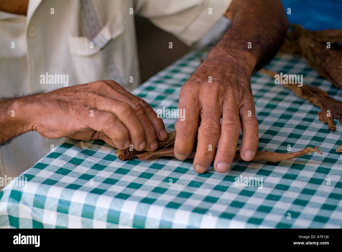Senior man rolling a cigar, Vinales Valley, Pinar del Rio Province, Cuba. - Stock Image