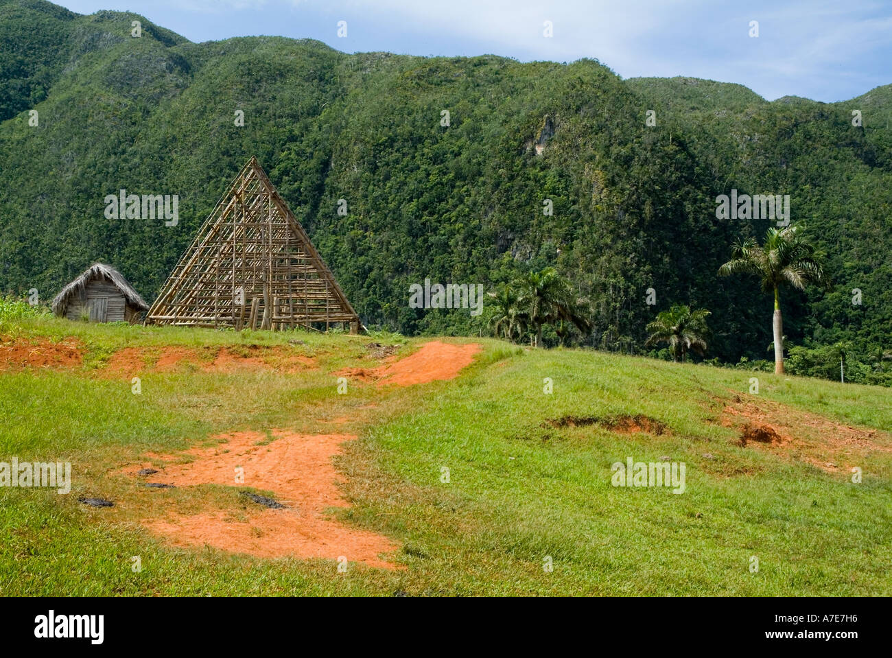 Hut with a traditional thatched roof with coconut trees and the Mogotes in the background, Vinales Valley, Cuba. - Stock Image