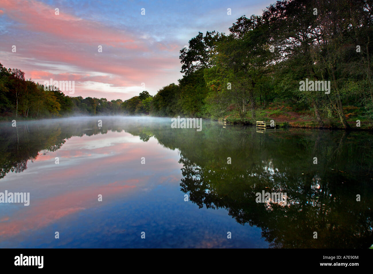Cannop Pond at dawn Forest of Dean Gloucestershire, England - Stock Image