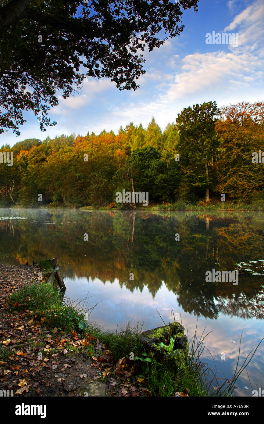 Cannop Pond at dawn Forest of Dean Gloucestershire England - Stock Image
