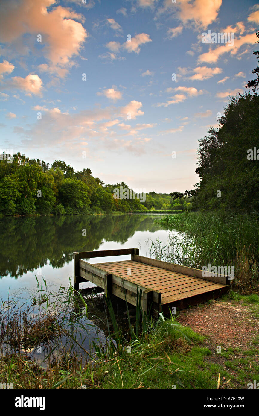 Cannop Ponds, Forest of Dean, Gloucestershire, England - Stock Image