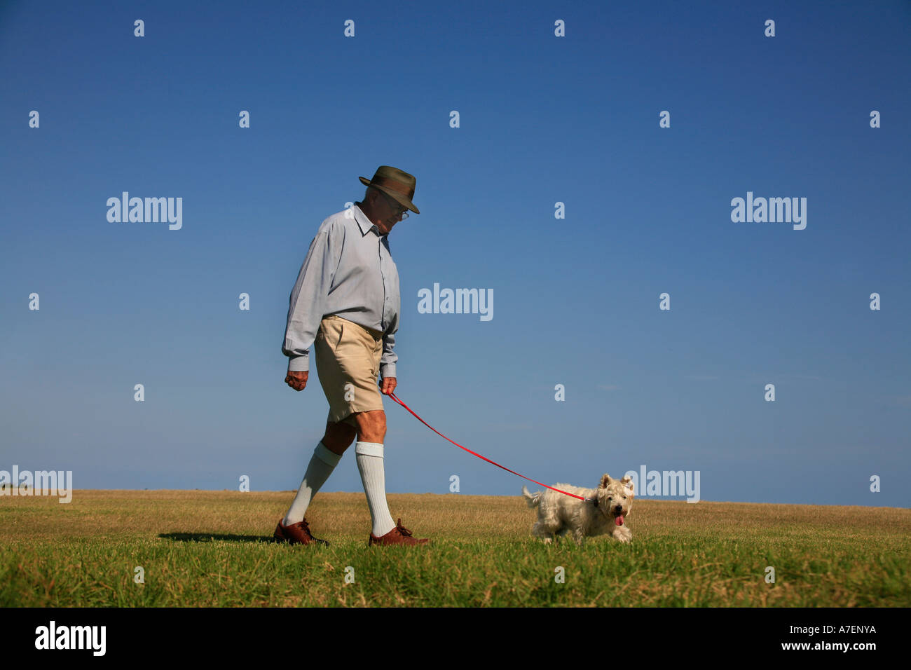 A man in long socks and shorts walks the dog Stock Photo  6752889 ... 62a51a762