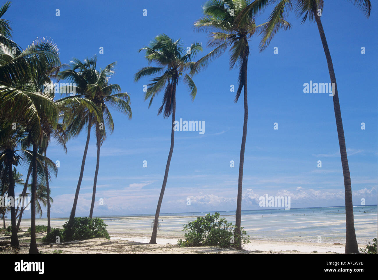 Ocean Road with coconut palms, seafront in Dar es Salaam. Tanzania - Stock Image