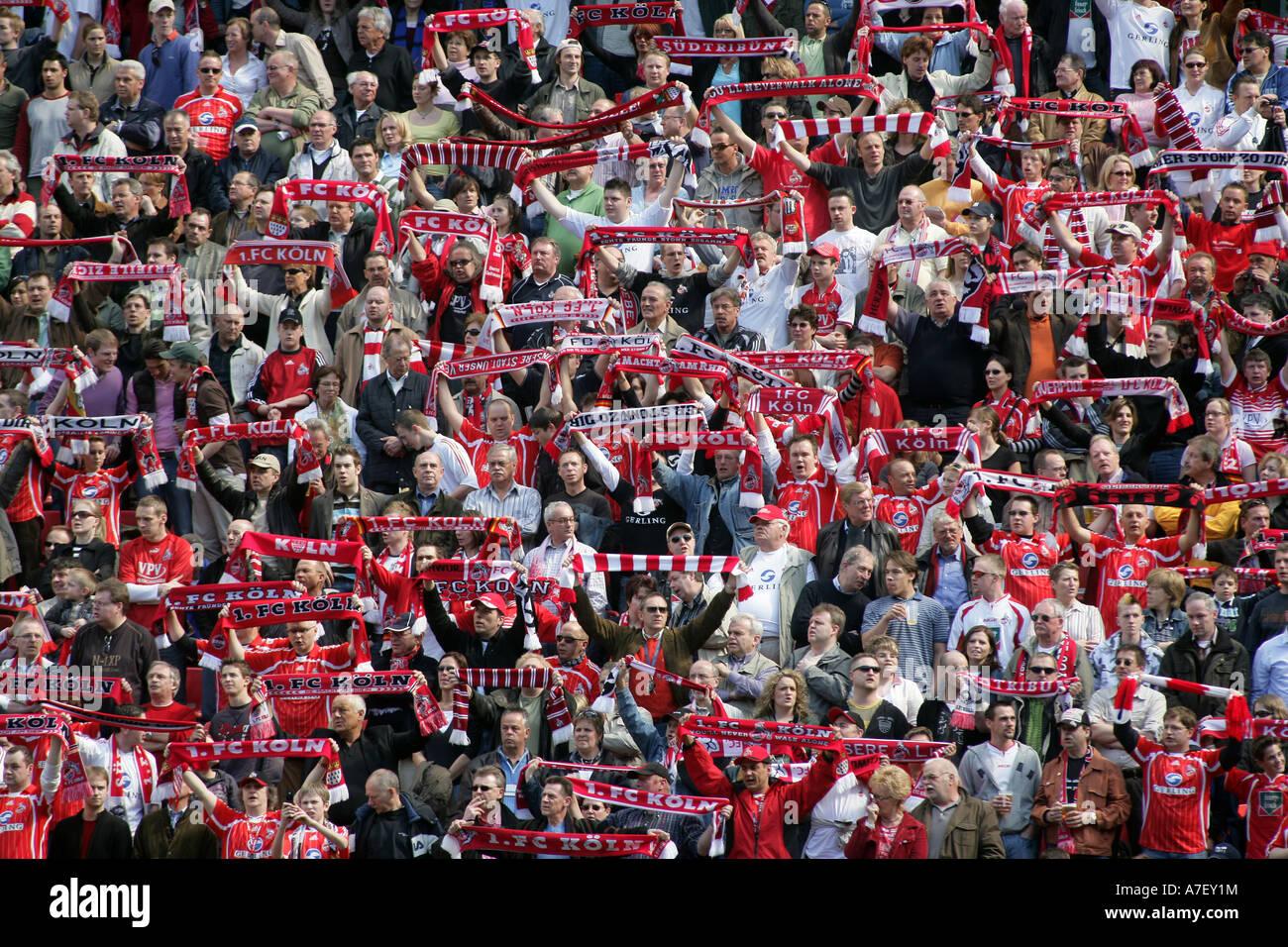 Fans of the german second league soccer club 1, FC koeln in the Rheinenergiestadion. Cologne, Northrhine-Westfalia, - Stock Image