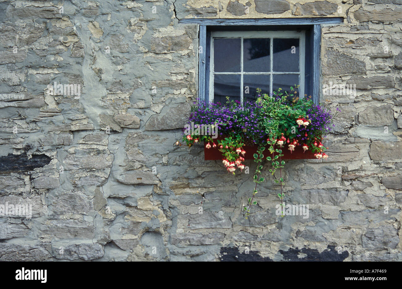 Shutter Colors For Brick House Window Box With Flowers And Vines Beneath An Old Painted