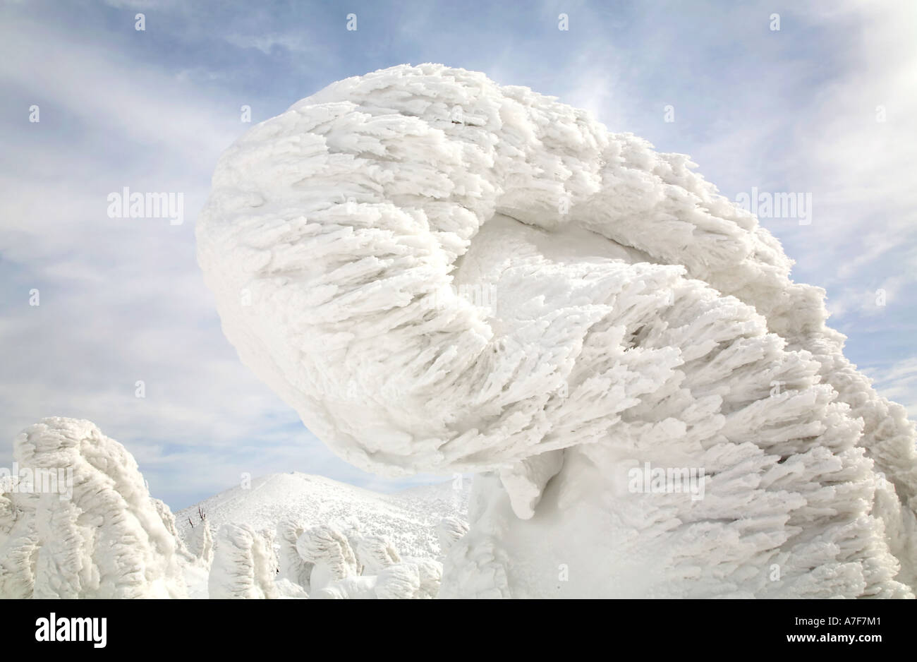 Snow Monsters - Trees with snow frozen on to them in winter Mount Hakkoda Japan Stock Photo