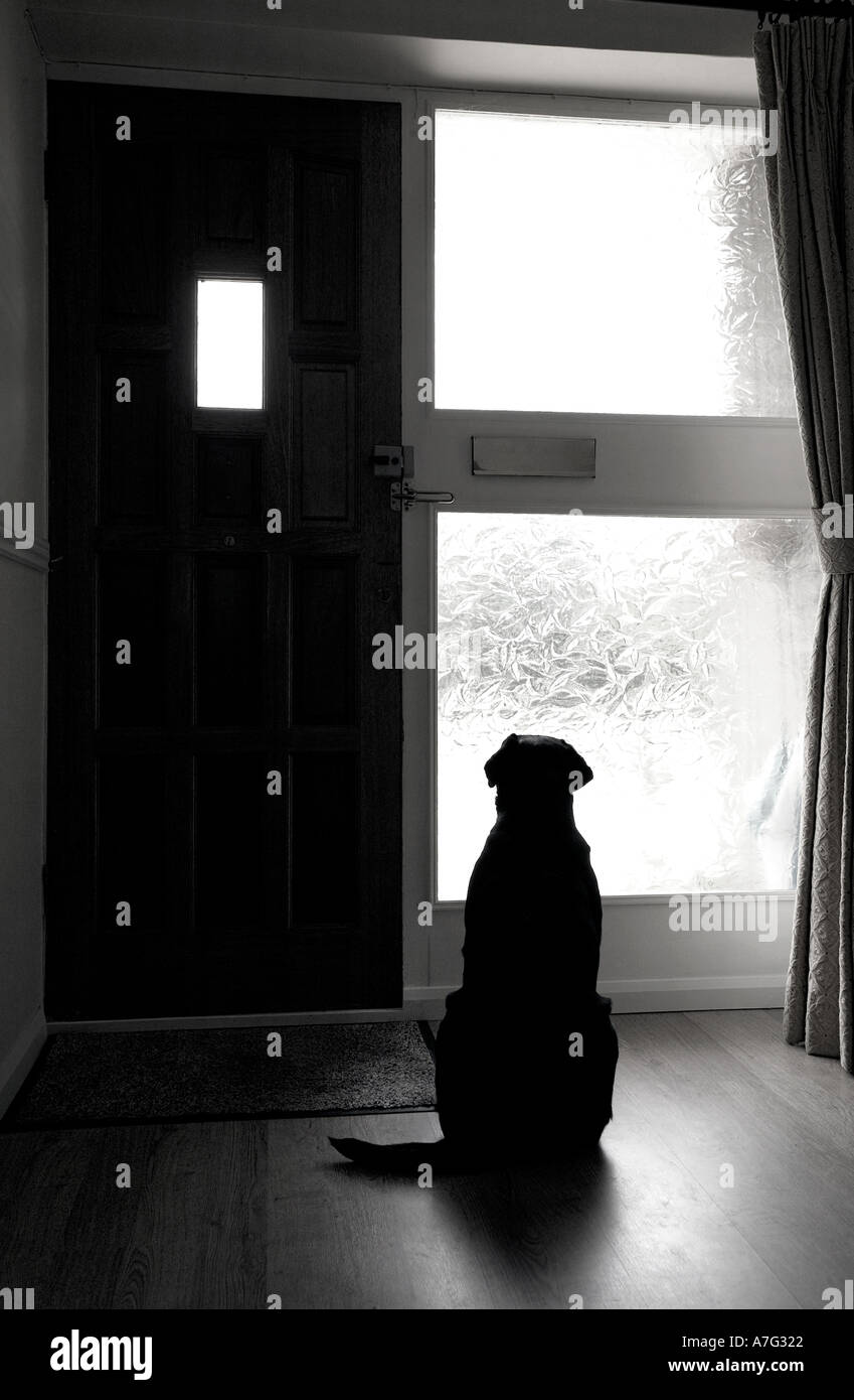 Dog Waiting - Stock Image