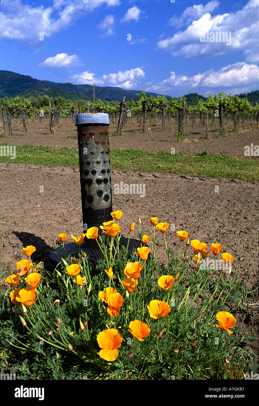 USA, California, Napa Valley, wine country, smudge pot and poppies in a vineyard - Stock Image