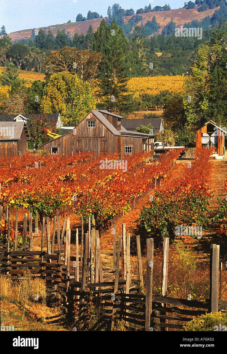 USA, California, Anderson Valley, wine country, fall color in vineyards and wineries - Stock Image