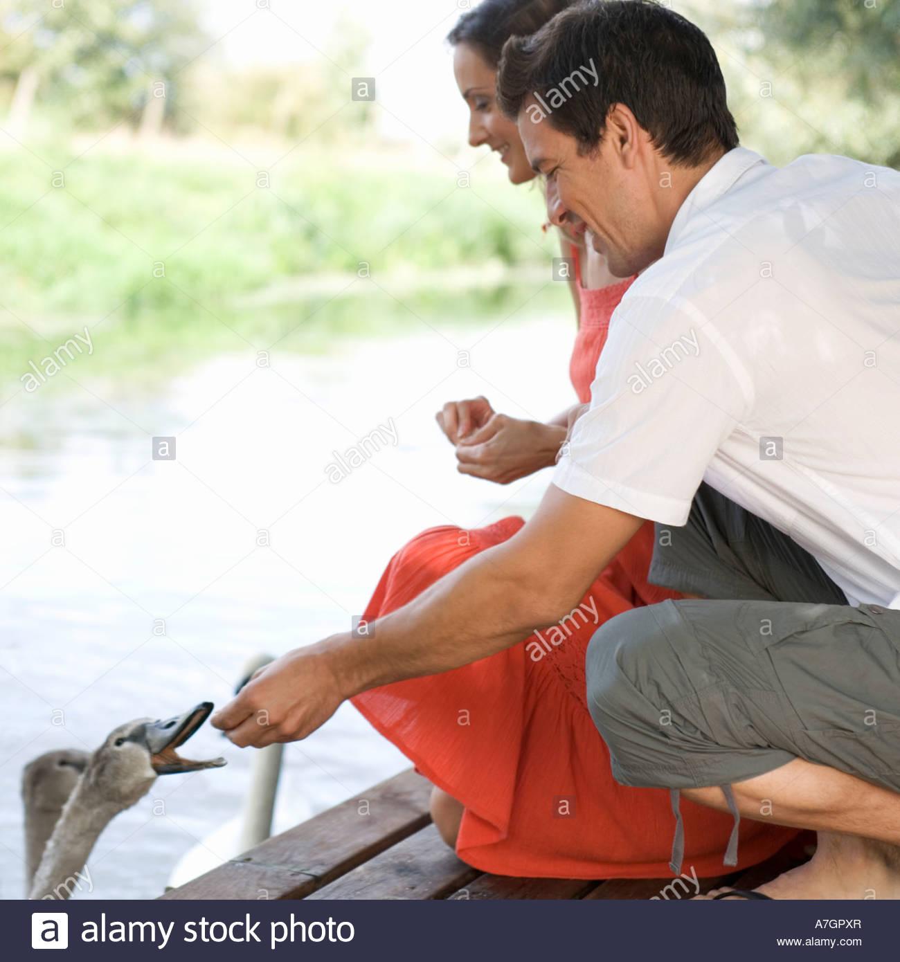 Young couple feeding swans Stock Photo