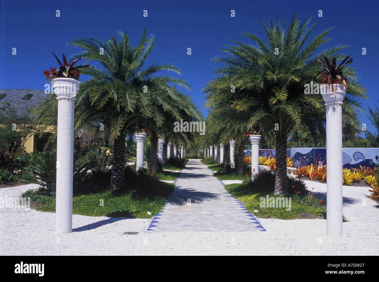 Date palm allee naples botanical garden naples fl usa - Botanical gardens naples florida ...
