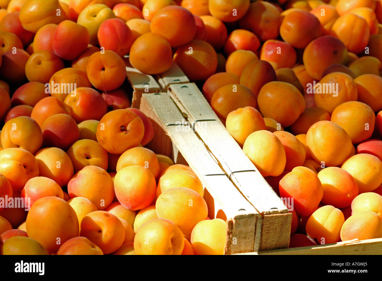 Wooden Fruit Boxes Filled With Apricots For Sale Stock Photo