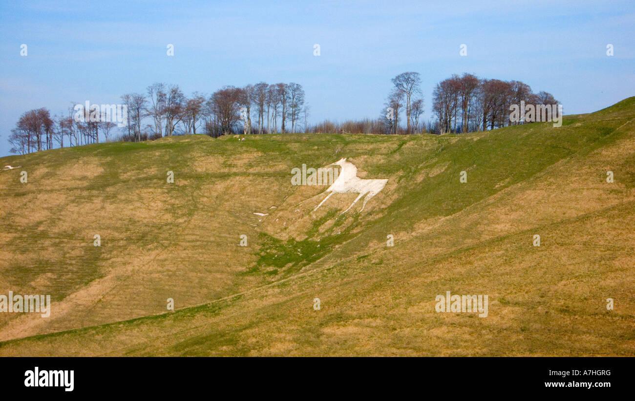 White Horse Hill figure on cherhill down Wiltshire UK Stock Photo