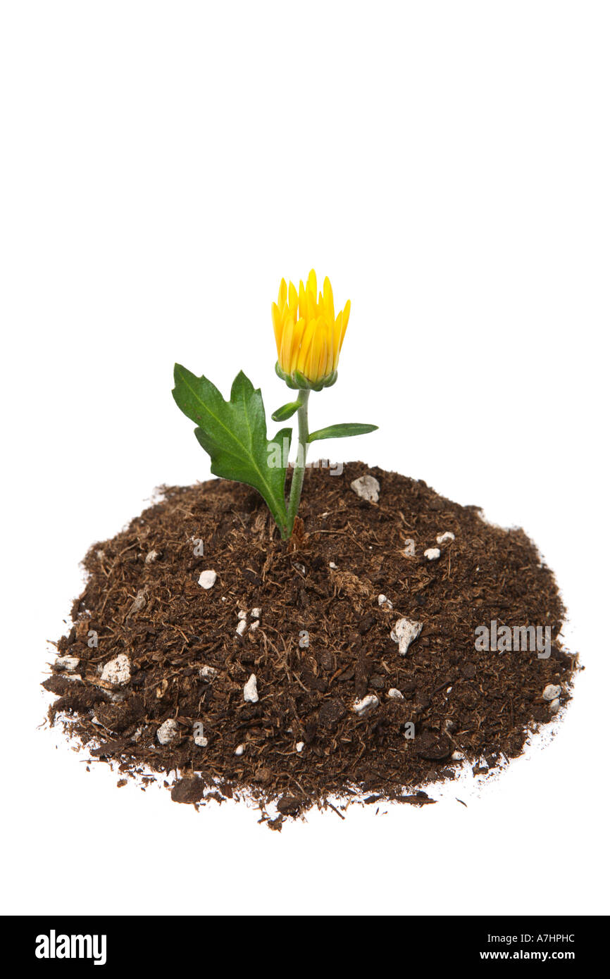 Potting Soil Cut Out Stock Images & Pictures - Alamy
