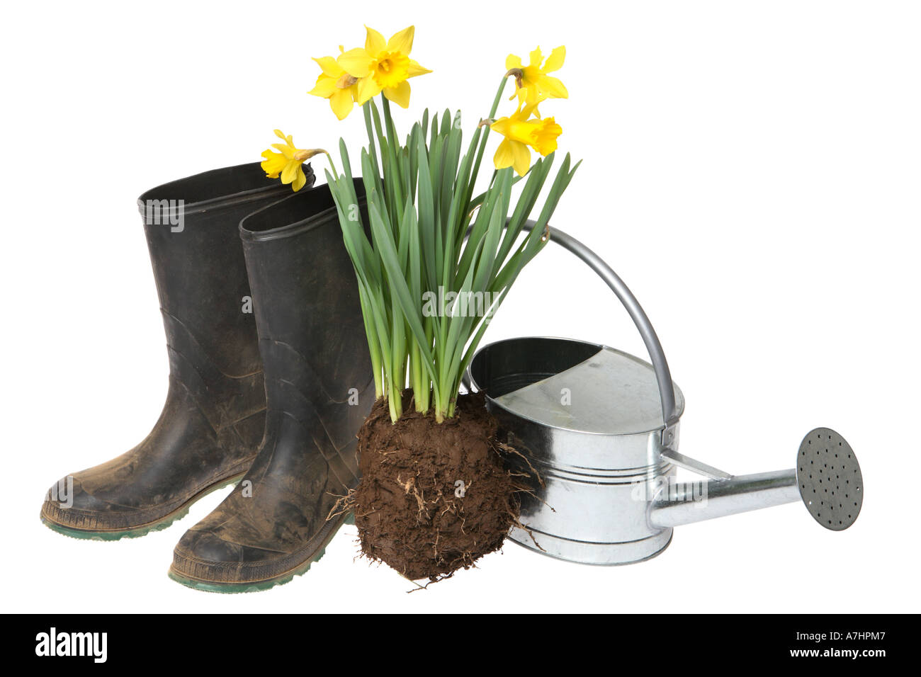 Garden objects; Rubber boots, daffodils and watering can. - Stock Image