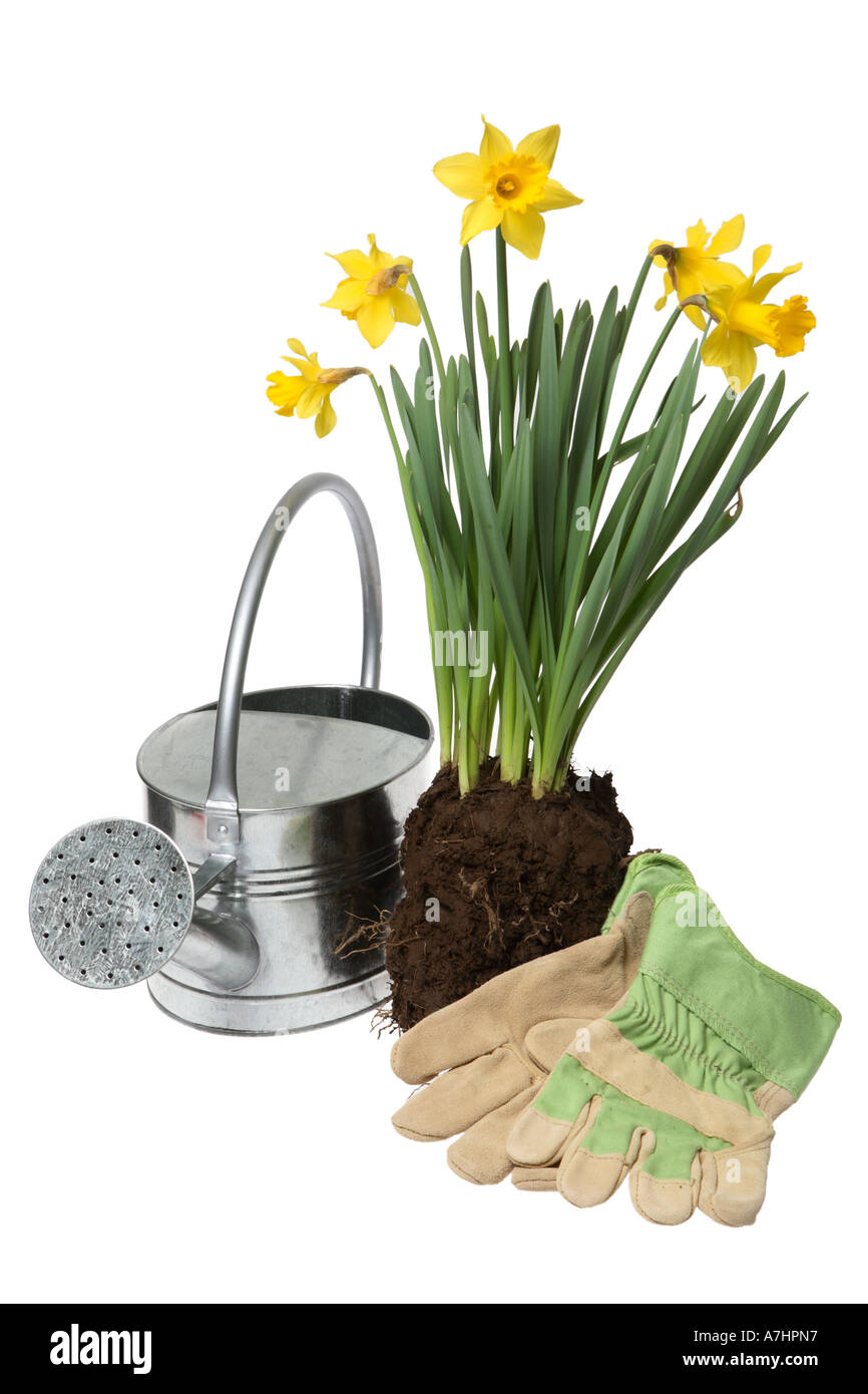 Watering can, daffodils and gardening gloves. - Stock Image