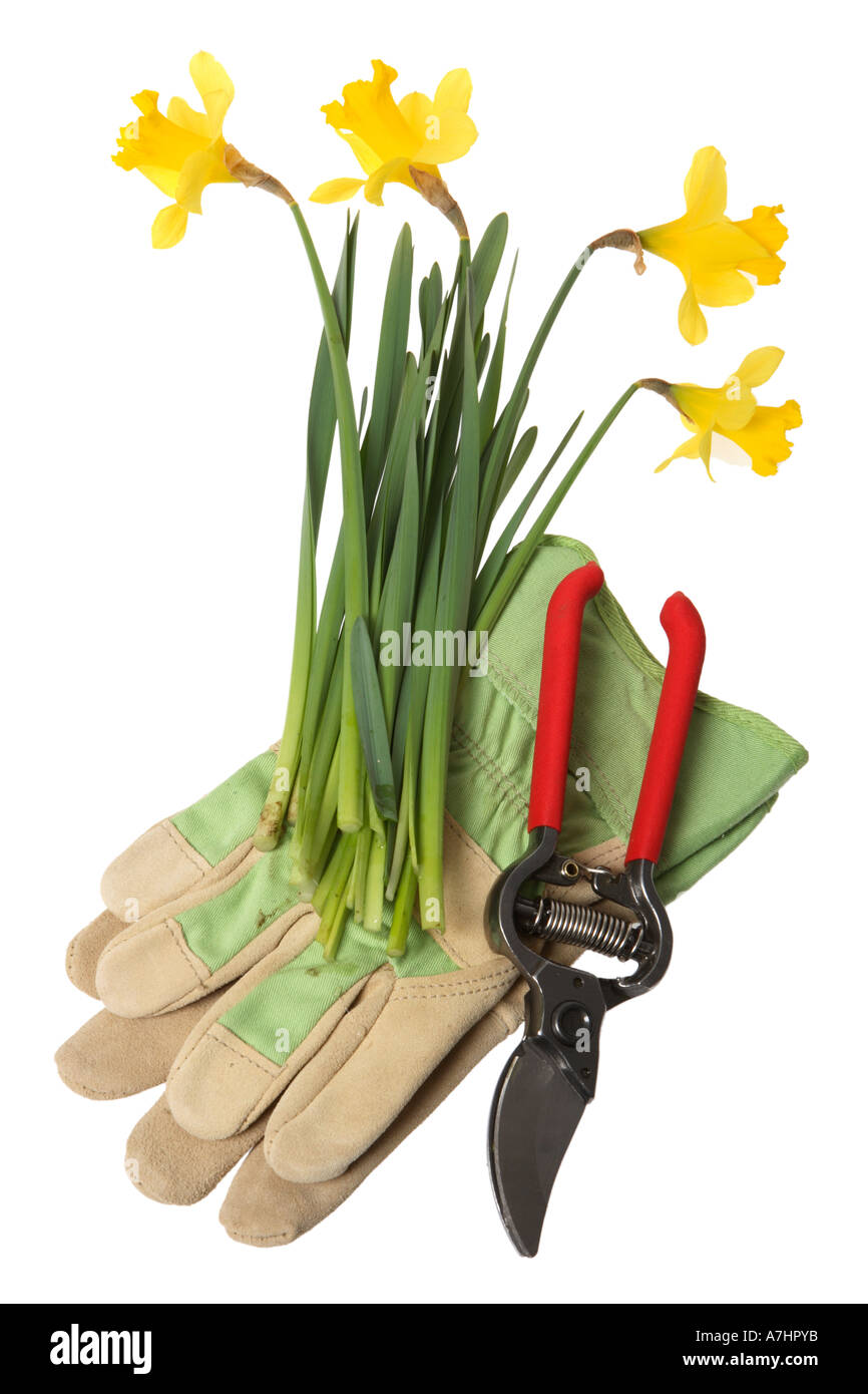 Gardening objects: Daffodils, gloves and pruning clippers. - Stock Image