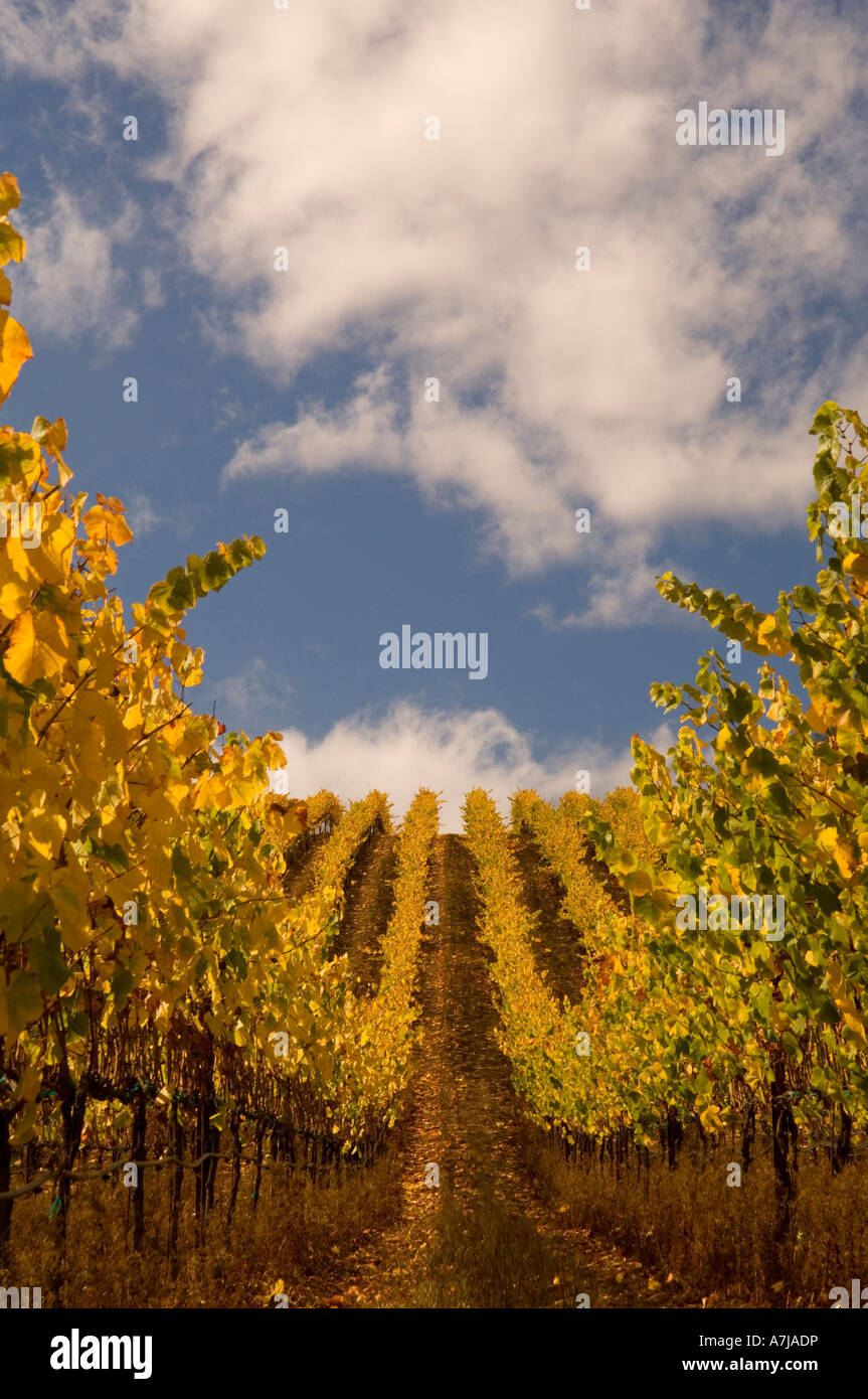 Goldeneye Vineyard Anderson Valley California - Stock Image