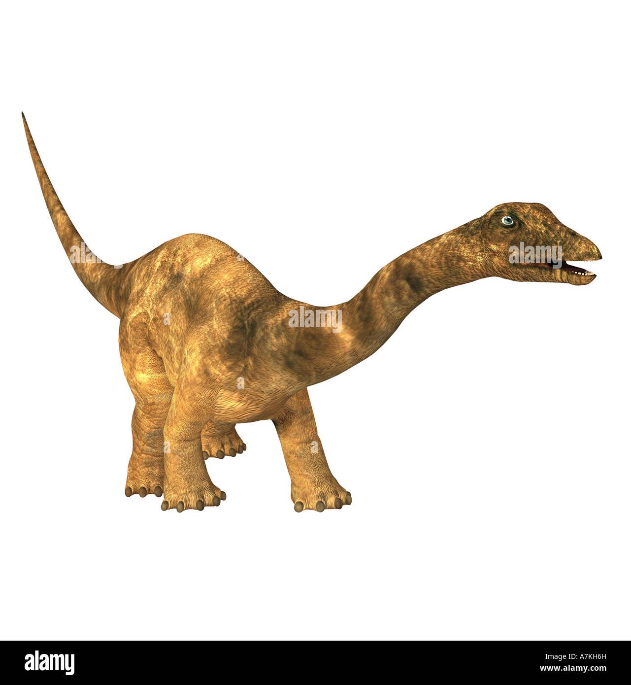 Diplodocus  dinosaurStock Photo