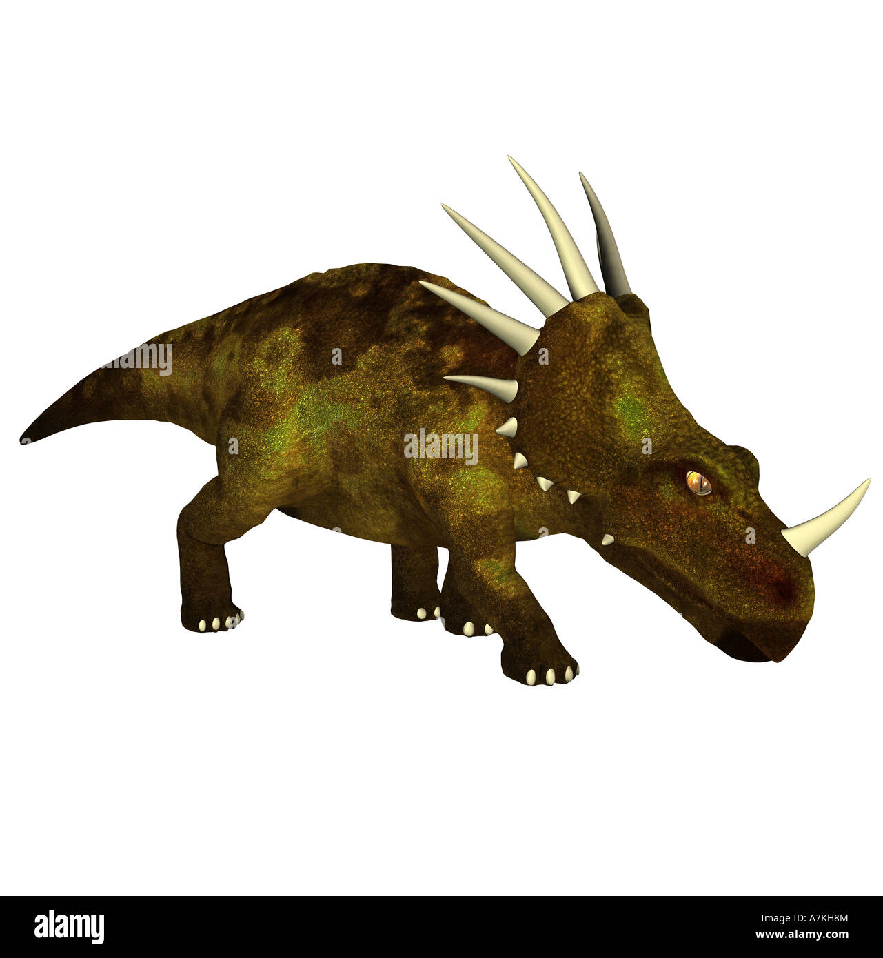 Styracosaurus  dinosaurStock Photo
