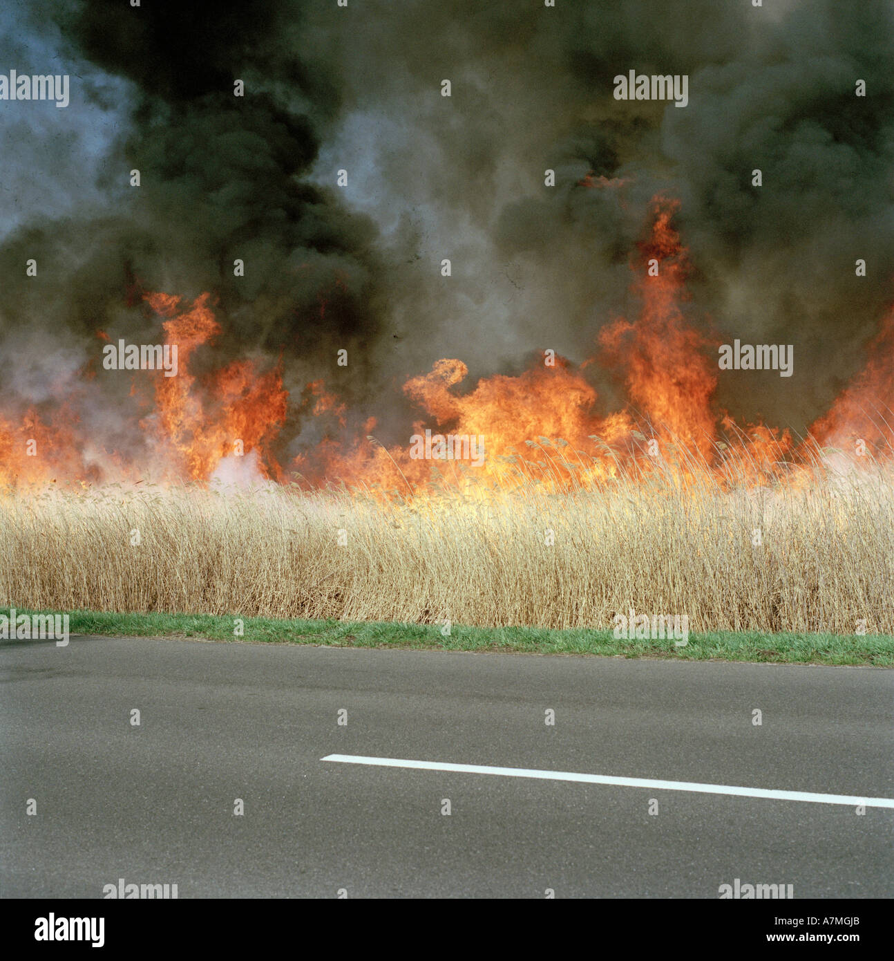 A fire burning on a roadside - Stock Image