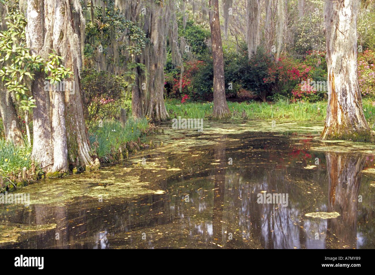 Cypress Gardens South Carolina Stock Photos & Cypress Gardens South ...