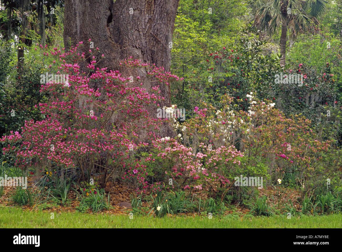 South Carolina Botanic Garden Stock Photos & South Carolina Botanic ...