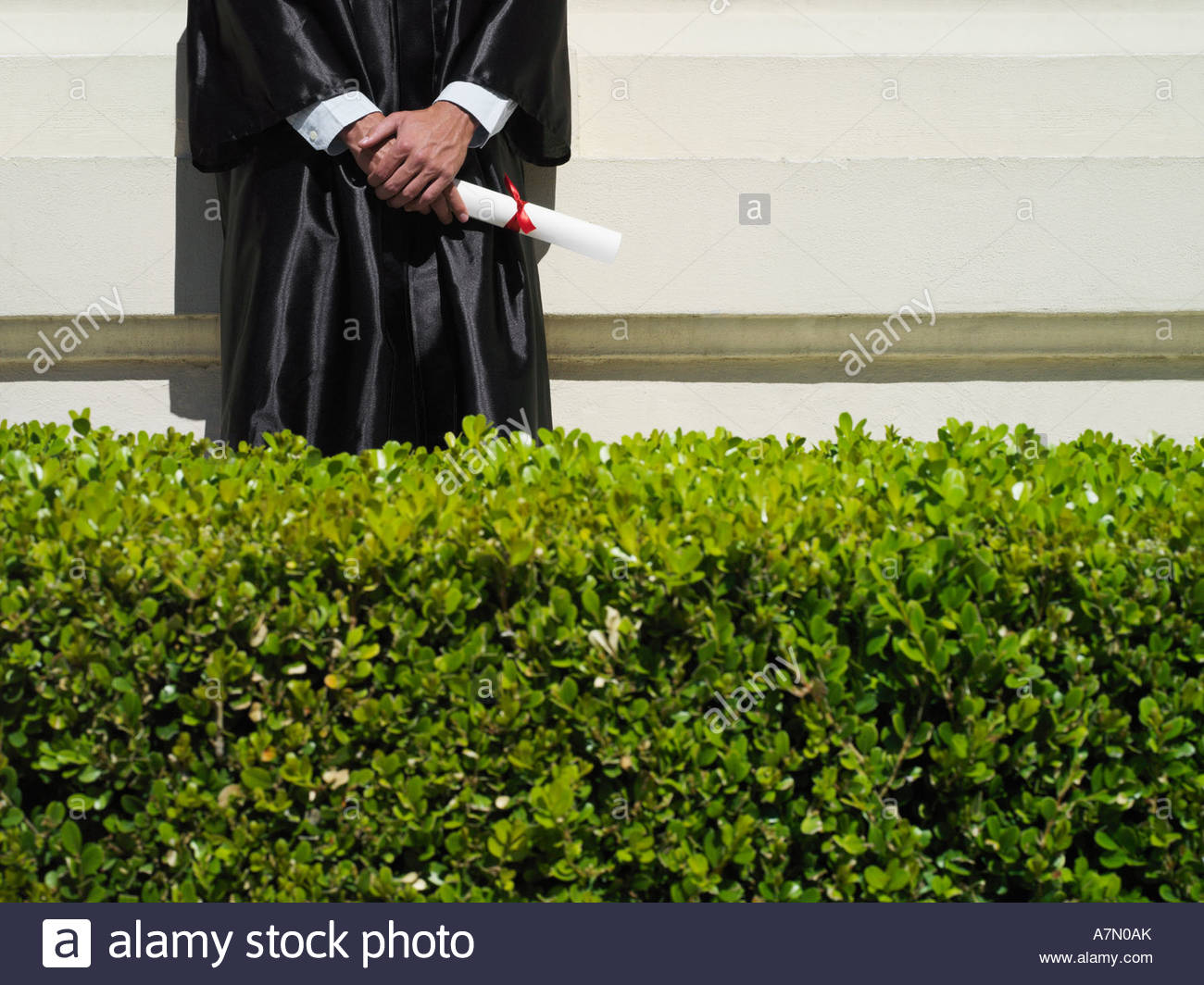 University student in graduation gown holding diploma mid section hedge in foreground - Stock Image