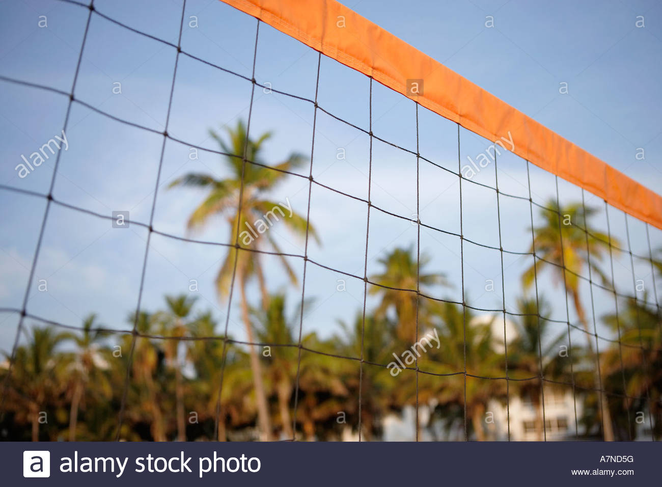 Close up of beach volleyball net palm trees in background focus on foreground low angle view - Stock Image