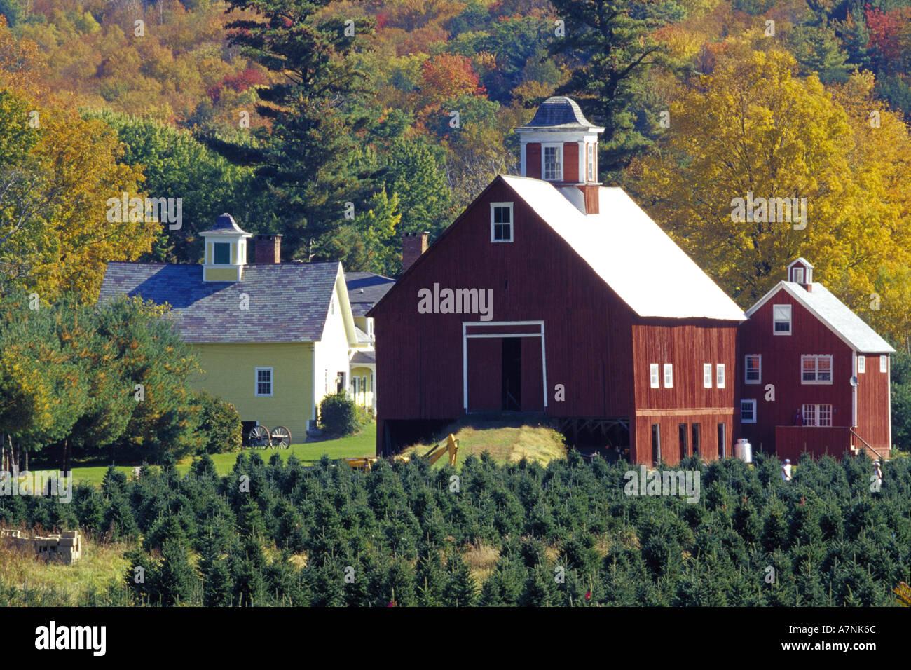 N.A., USA, Vermont. Christmas tree farm near Springfield in autumn Stock Photo: 3878763 - Alamy