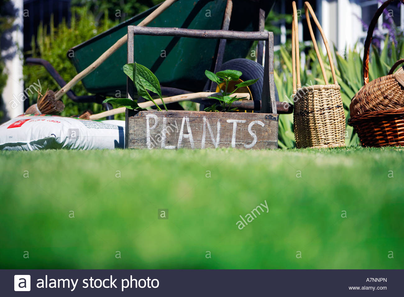 Box labeled plants in garden beside wheelbarrow compost and wicker baskets surface level - Stock Image