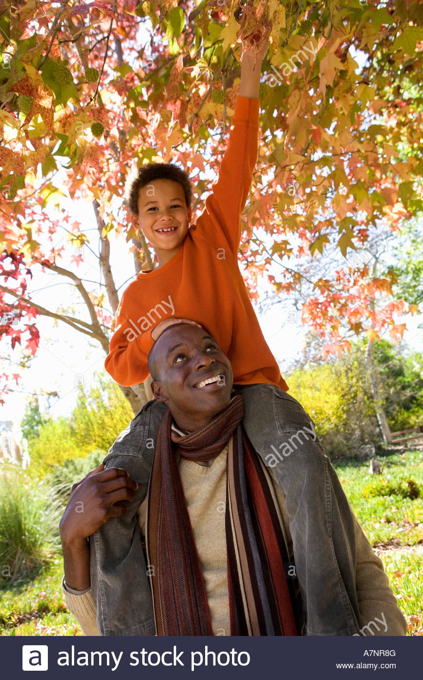 Father carrying son 7 9 on shoulders in autumn park boy grabbing overhanging branch smiling portrait tilt - Stock Image