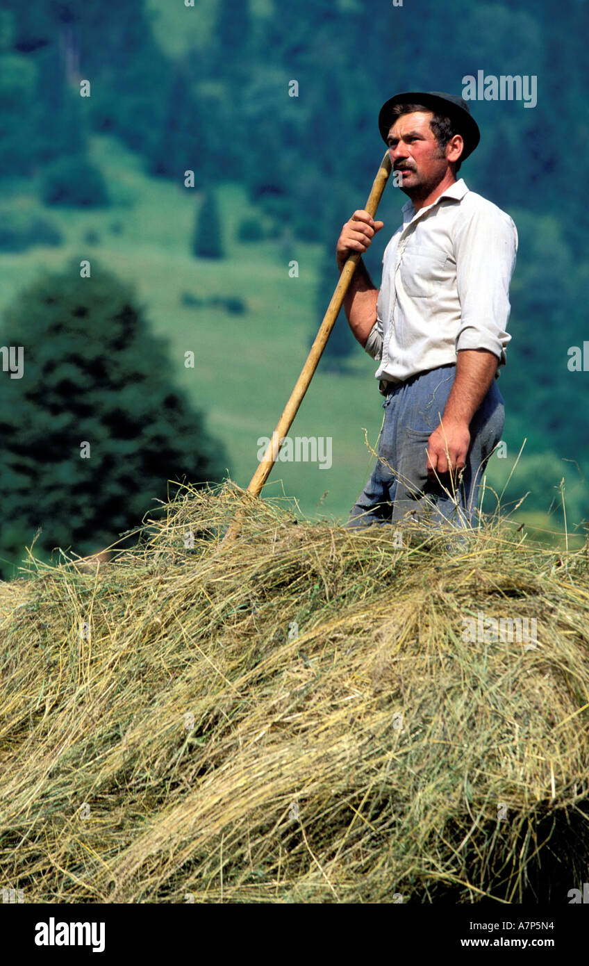 Romania, Bucovine region, a peasant charges the hay on his cart - Stock Image