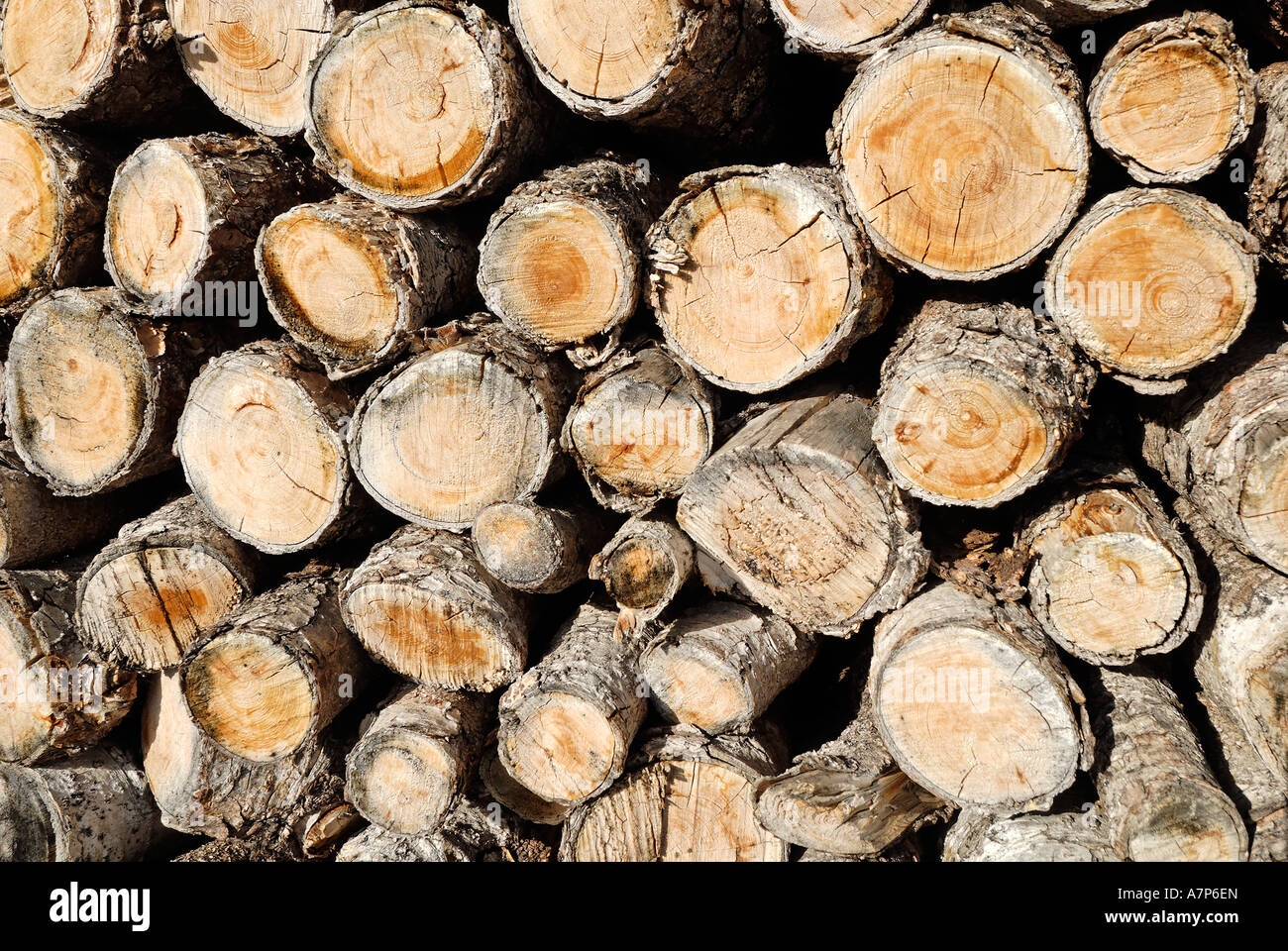 Nachwachsender Rohstoff Holz renewable resource wood - Stock Image