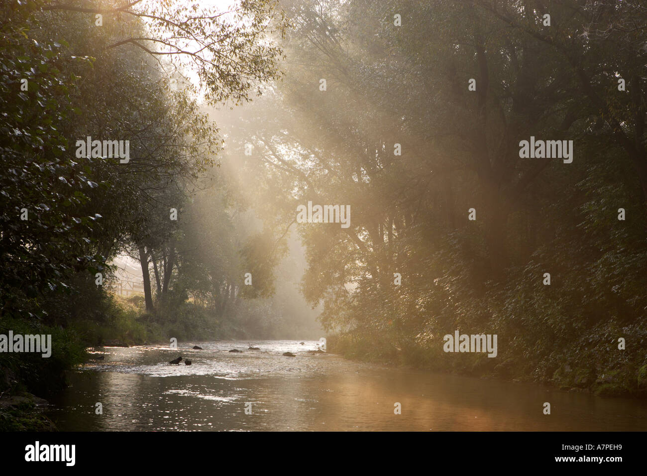 Sun and fog illuminate the Triesting river Triesting valley Lower Austria - Stock Image