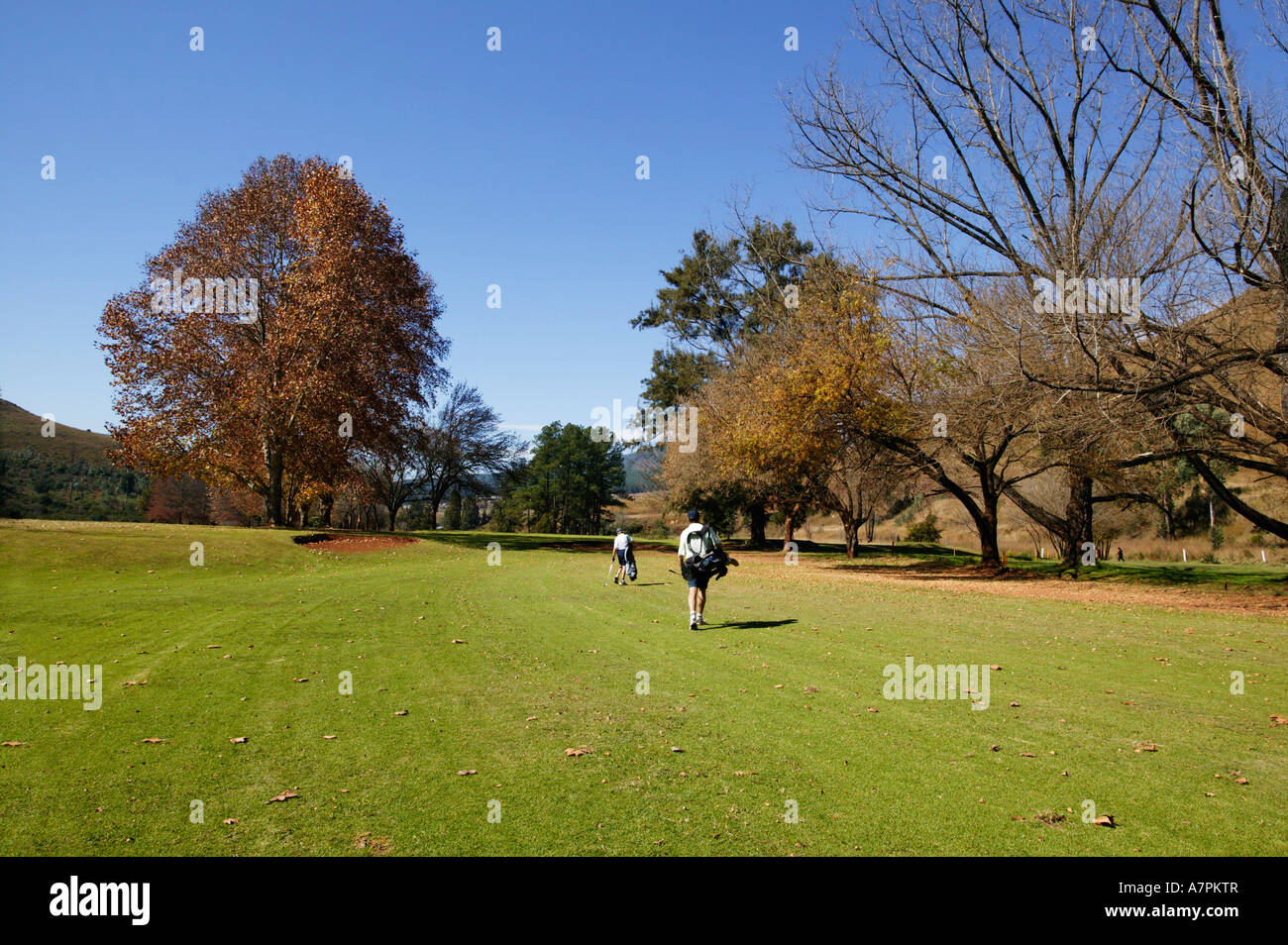 Two golfers walking on the fairway at Pilgrims Rest golf club with trees in autumn colours South Africa - Stock Image