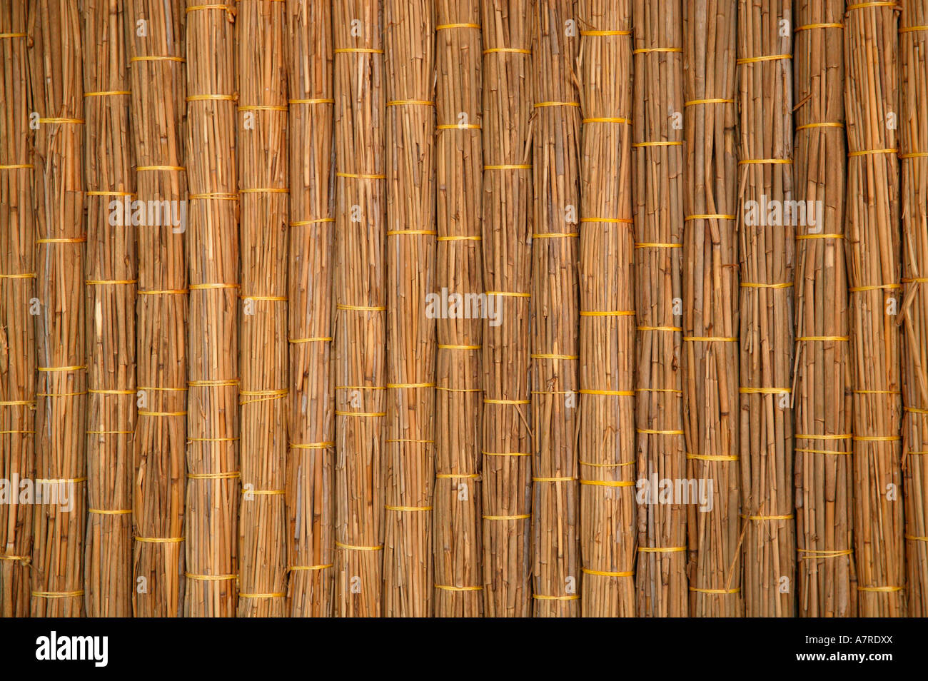 Dry reeds tied together in bundles and used in a wall panel Barra Inhambane Province Mozambique - Stock Image