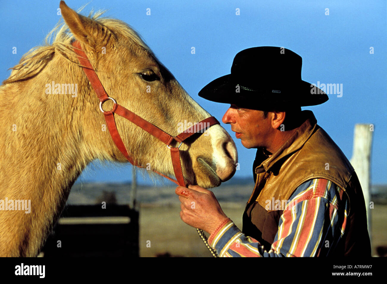 randals ranch stock photos randals ranch stock images alamy