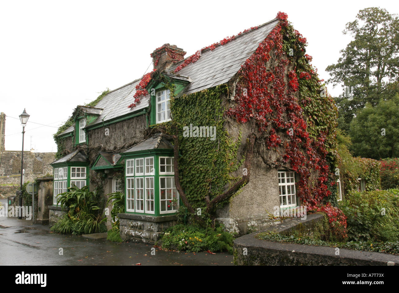 House on roadside covered with ivy, Republic of Ireland - Stock Image