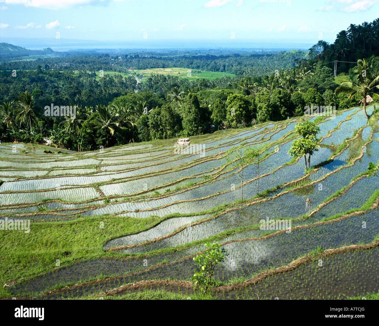 High angle view of flooded paddy field, Lesser Sunda Islands, Sunda Archipel, Indonesia - Stock Image