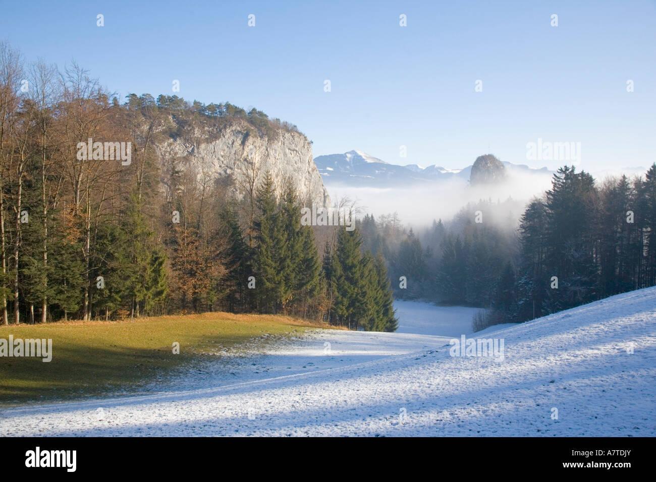 Fog over forest, Bavaria, Germany Stock Photo