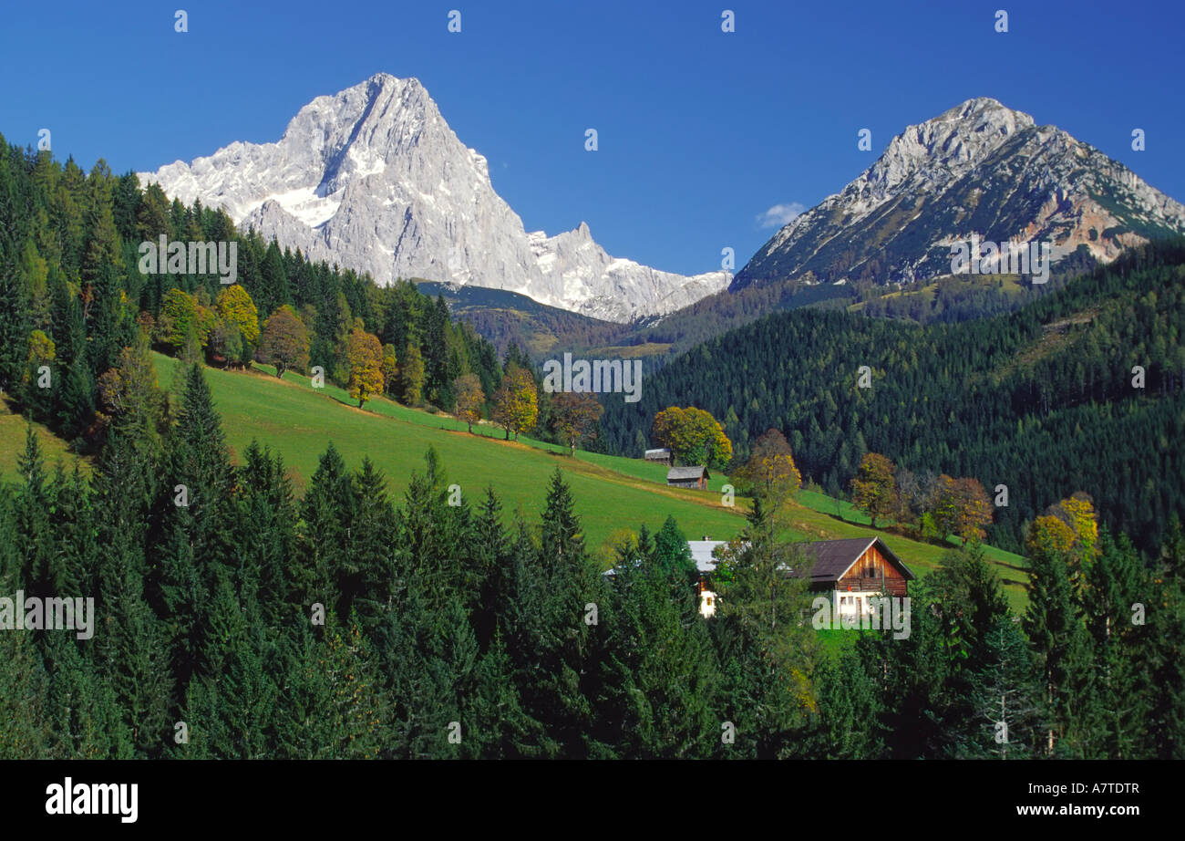 Coniferous trees in forest, Austria - Stock Image