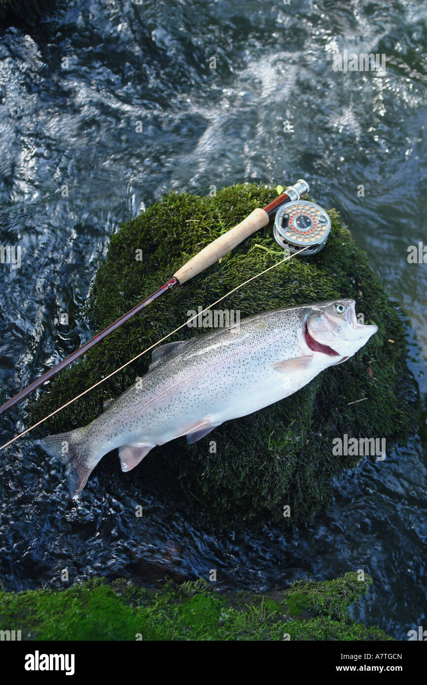 High angle view of dead fish with fishing rod - Stock Image