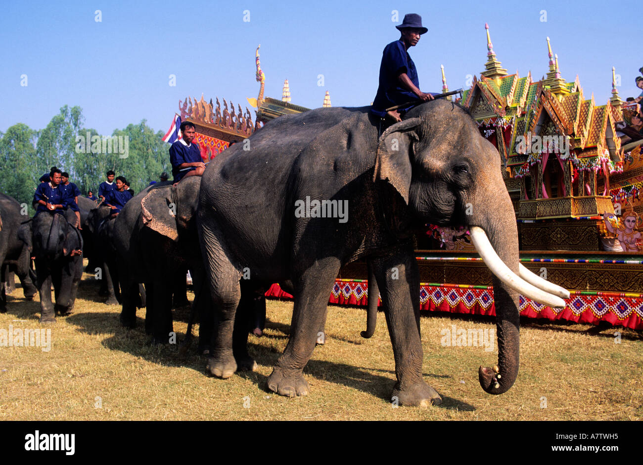 Thailand, I San province, elephants celebrates at Surin - Stock Image