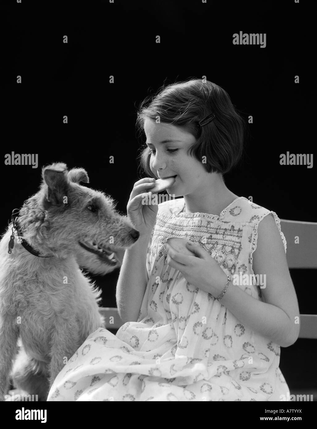 1920s 1930s WIRE HAIR TERRIER DOG WATCHING YOUNG GIRL EATING COOKIE - Stock Image