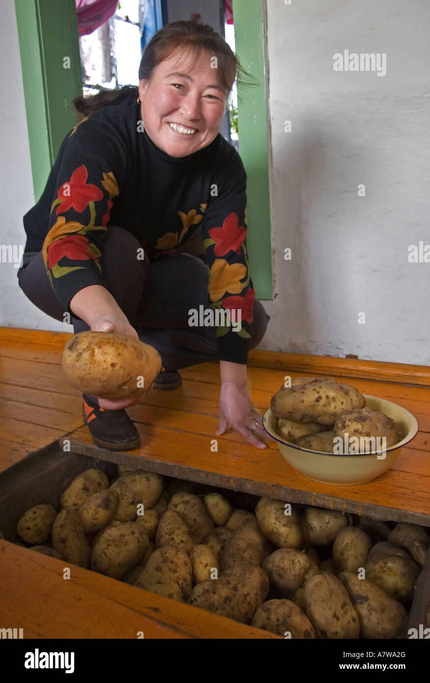 Woman putting potatos inside house for preservation - Stock Image