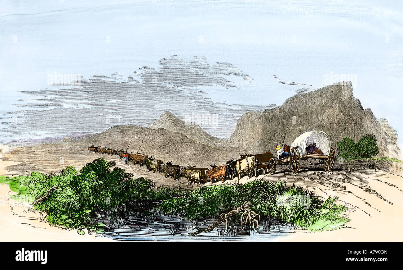 Cape of Good Hope wagon drawn by oxen South Africa 1800s. Hand-colored woodcut - Stock Image