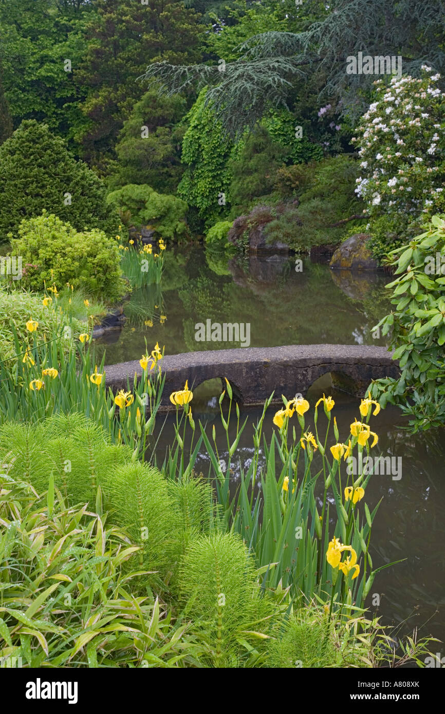 wa seattle kubota garden japanese garden with irises - Kubota Garden