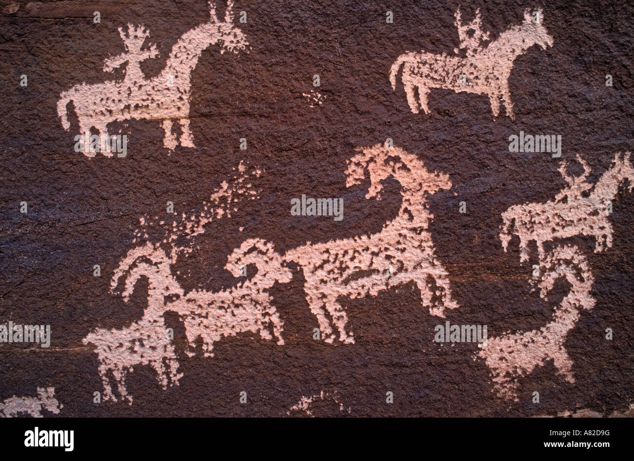 Petroglyphs near Wolfe Ranch Arches National Park Utah - Stock Image
